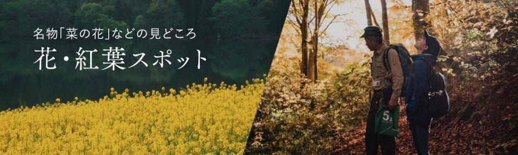 花・紅葉スポット